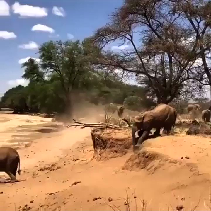 Mom shows her baby elephant how to cross the river bank..  He almost nails it..
