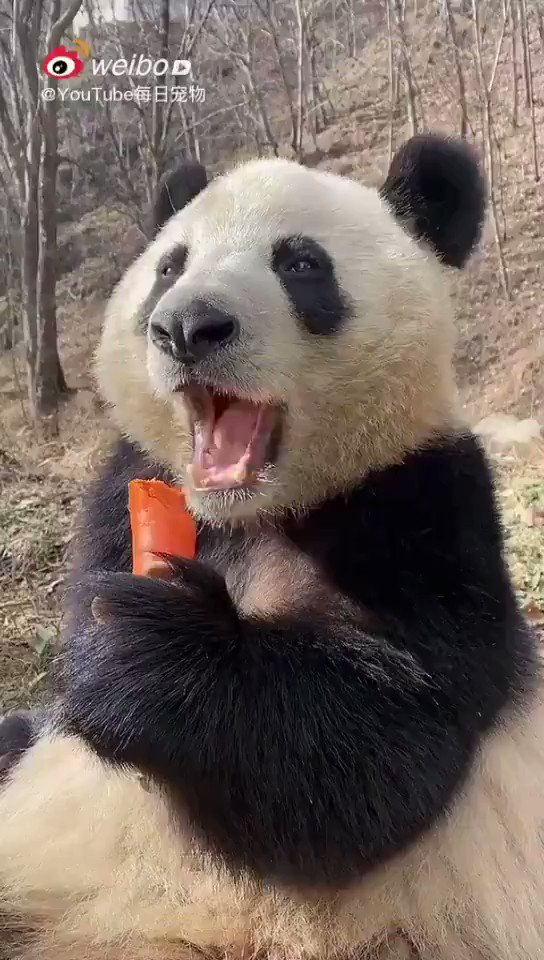 Pressure Almost Gone! The weekend is right around the corner! Relax and pamper yourself like this giant #panda~   #FridayFeeling #mood