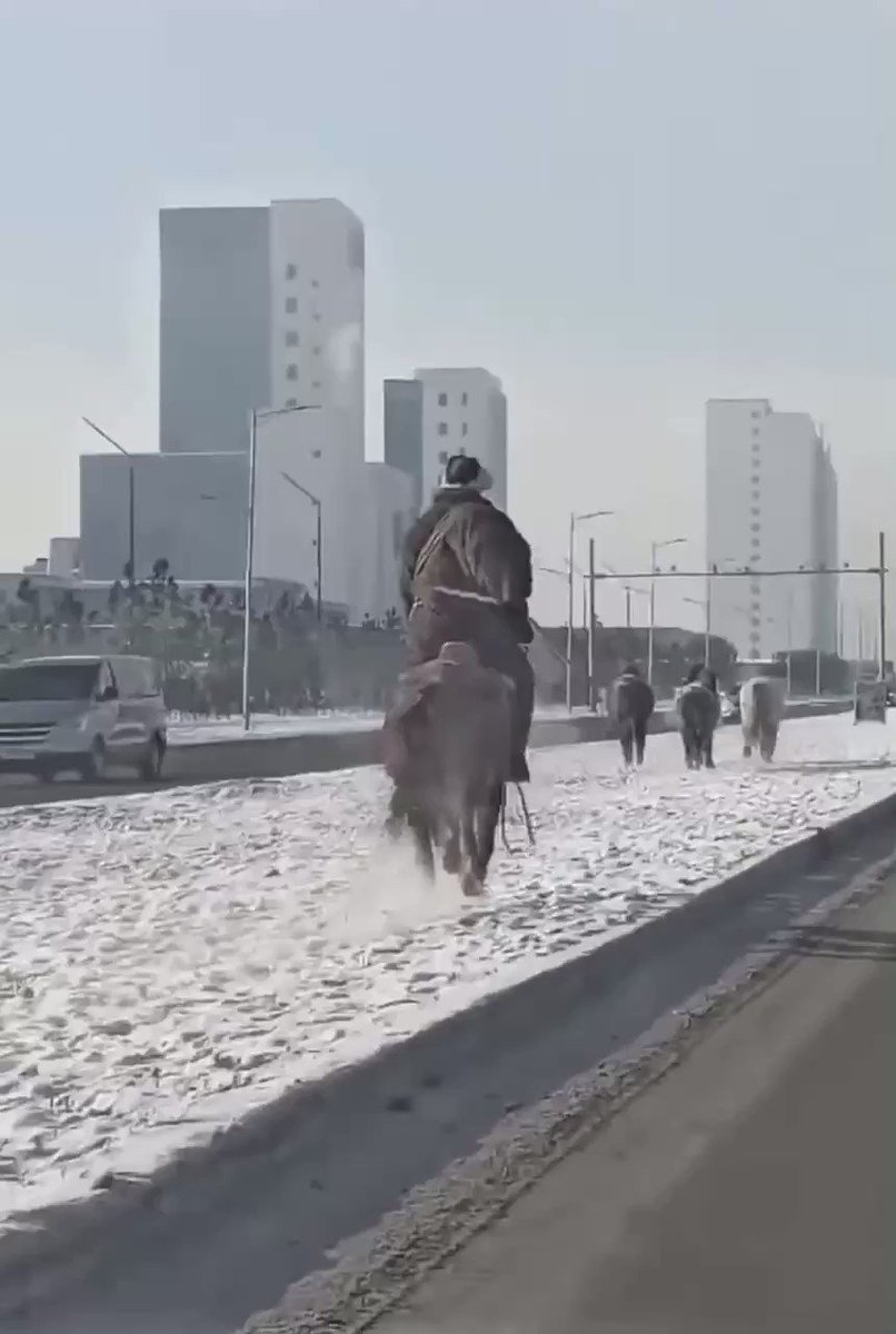 Just another morning in Mongolia