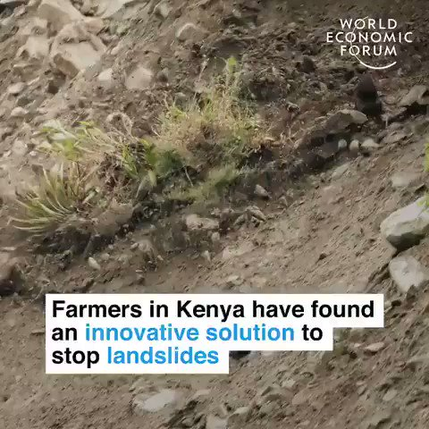 Farmers in Kenya are stopping landslides by planting bamboo. Protecting people, lowering carbon and binding the soil.   In this crisis, let nature be part of the solution.   #ActOnClimate #climatesolutions #climatecrisis #GreenNewDeal #nature