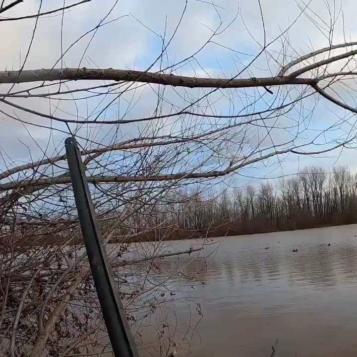 Landed 2 ft in front of me, I should've caught it!   #waterfowl #ducks #shooting #bluebill #duckhunting #gopro
