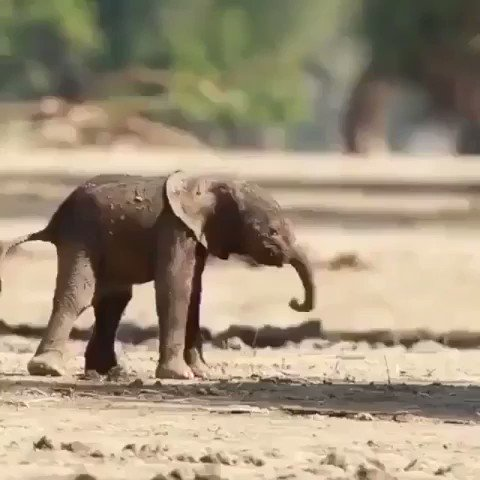 🐘 Brand new legs. Don't know how they function yet 😂 🥰 #SaturdayMorning #SaturdayThoughts #SaturdayVibes