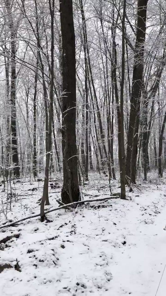 Winter and I went for a walk. The quiet was so serene and the trees so beautiful. Winter added the cuteness! #winter #snow