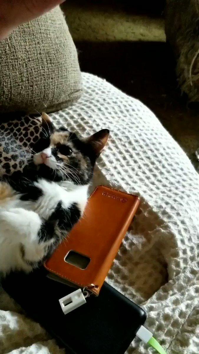 @AnnieGetYourGuy #Catsjudgingkellyanne
