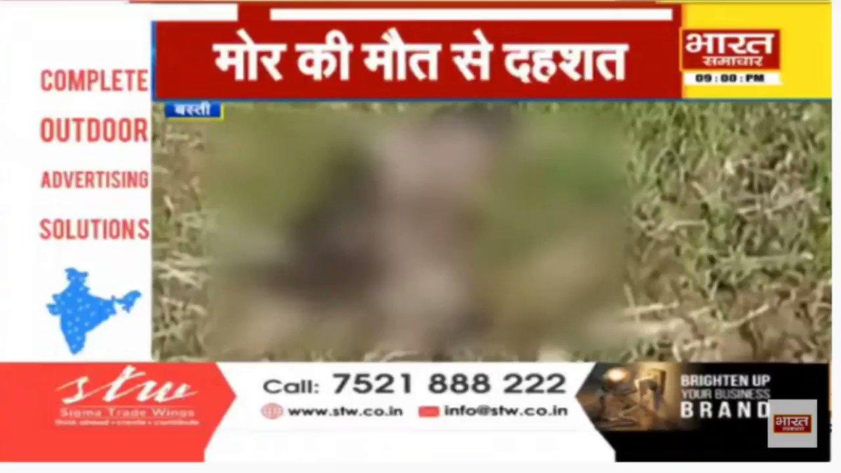 #Basti - जिले के विभिन्न क्षेत्र में तेजी से मर रहे पक्षी.