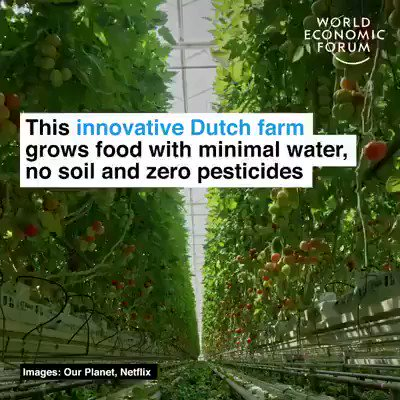 This innovative Dutch farm grows food with minimal water, no soil and zero pesticides.  This is where I find hope. In solutions being implemented all over the world. Let's speed it up.  #ActOnClimate #climatesolutions #GreenNewDeal #nature #hope