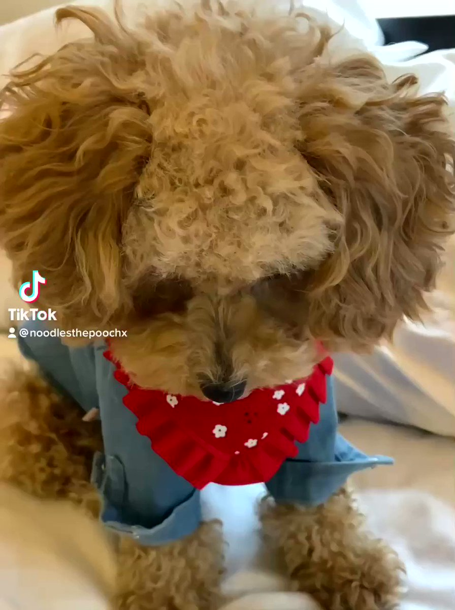 I didn't do it 🥺 @dog_rates @jimmyfallon #dogsoftwitter  #puppyeyes
