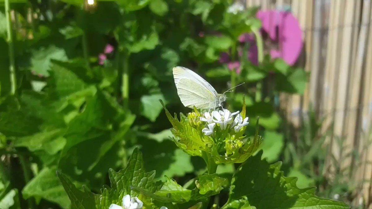 Not long till #spring now 🥚🐛🥐🦋  #Butterflywhisperer   #gardens #garden #gardening #sunshine #Flowers  #butterfly #Butterflies #springtime #happy #PositiveVibes #nature #beautiful #appreciate #life