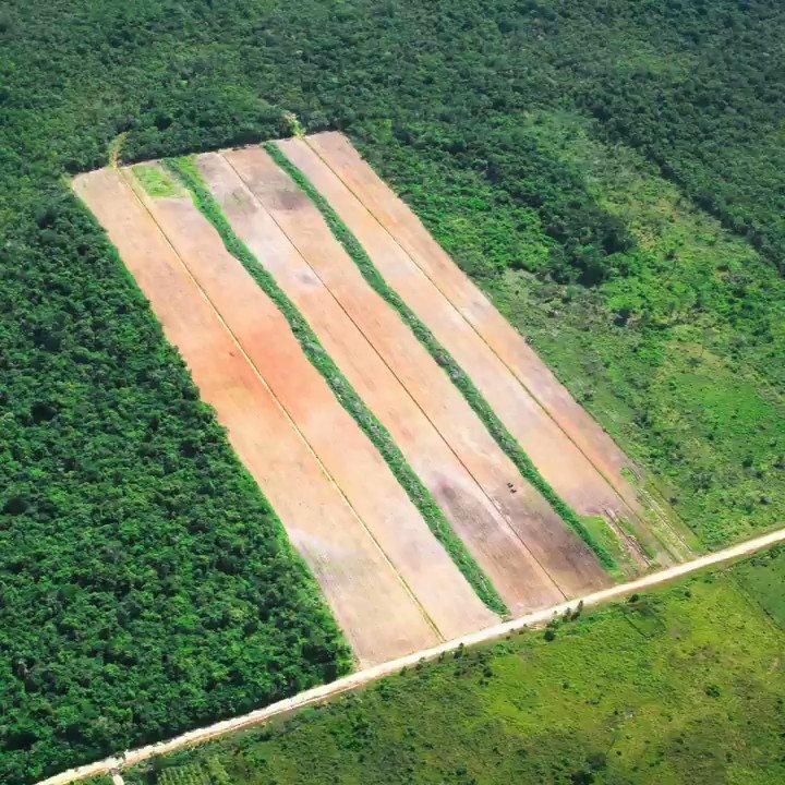 O ano de 2020 registrou um recorde no desmatamento na Amazônia. Entre janeiro e dezembro do ano passado, a floresta perdeu 8.058 km² de área verde. É a maior dos últimos dez anos. Os dados são do Sistema de Alerta de Desmatamento do Imazon.