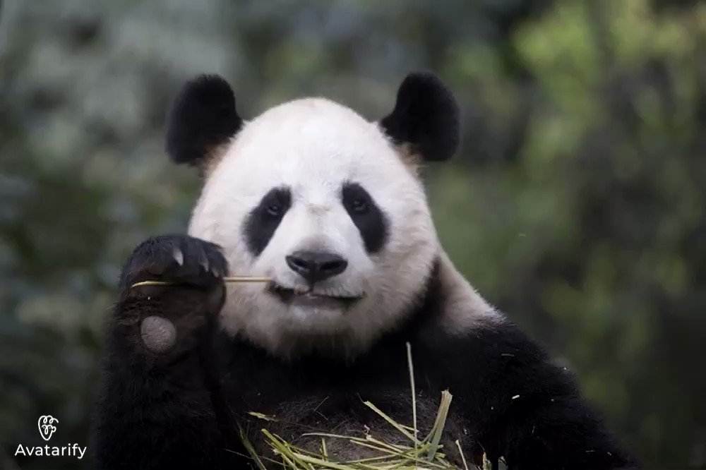 Listen to the panda. He's here to try and brighten our moods, and usher in some freakin' positivity.  #Inauguration2021  1/4 videos