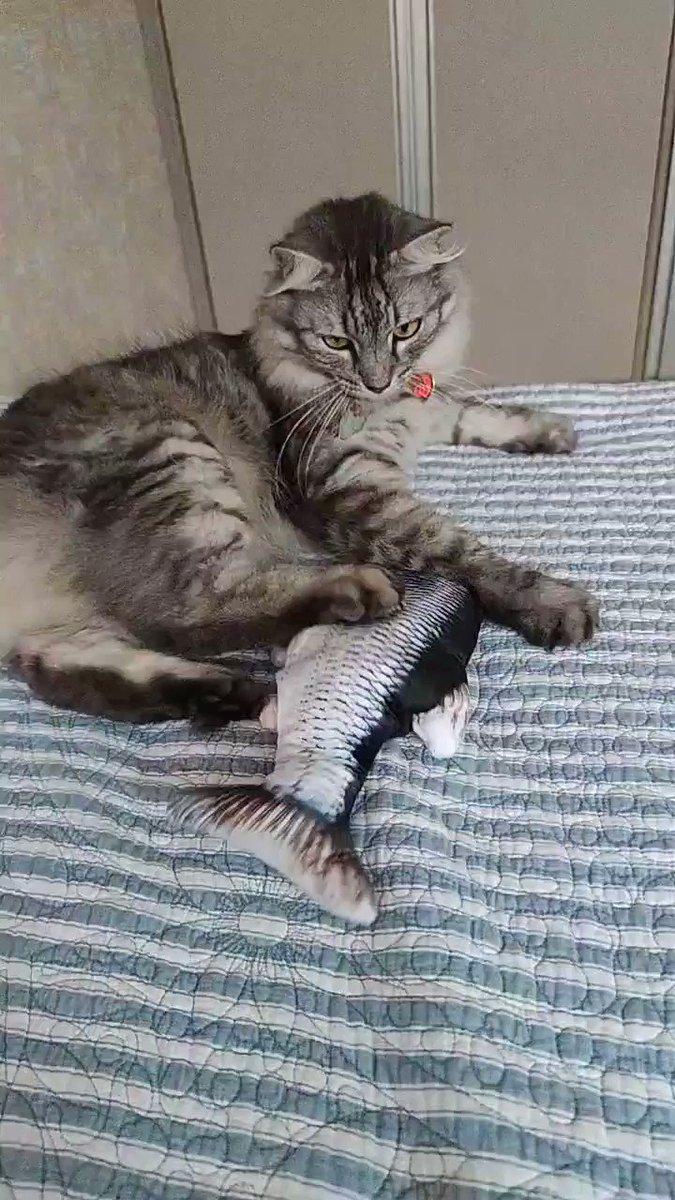 Nota 10/10 pro peixe que pedi na aliexpress