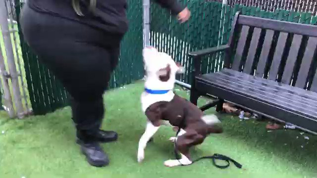 A STRAY PUPPY SHOWS UP JANUARY 6TH. YOU KILL HIM JANUARY 20TH? Seriously? They are in such a rush to kill Skipper #109829 that they havent even written up a bio on the @nycacc site. Please pledge via @TomJumboGrumbo and PLEASE RT SKIPPER. facebook.com/mldsavingnycdo…