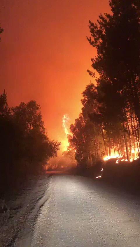 #EXTRAS EN #Nacimiento, región BIO BIO evacuación en proceso por incendio forestal con peligro a viviendas en sectores Palihue y Las Corrientes. #cat8