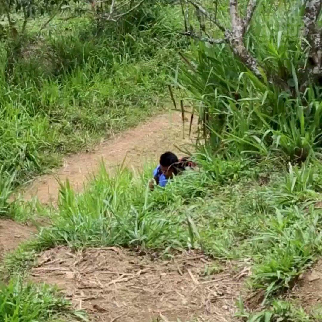 La pandemia está amenazando la educación de millones de niños, sobre todo de quienes viven en áreas aisladas sin internet.  Los maestros de esta comunidad indígena en Ecuador caminan durante horas a través de la selva para mantener viva la enseñanza.