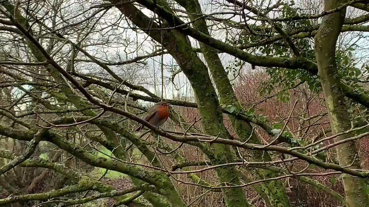 @ECMFCM @waterwaysirelan @fermanaghomagh @DiscoverIreland @macgeopark @DiscoverNI @CamlakeCanvas @ChairFODC @fermanaghlakes @ErneWaterTaxi @HNEscapesCIC Yesterday's Robin a muse and amusing  😊and cheep at the price. (I'll get my coat) @DiscoverNI @wearetrekni @belfasthour @explore_54 @AertbyLisa #NaturePhotography #win #Robin #tuesdayvibe