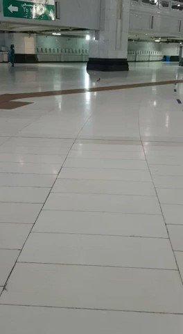 #فيديو حمامة تسجد لله في الحرم المكي...
