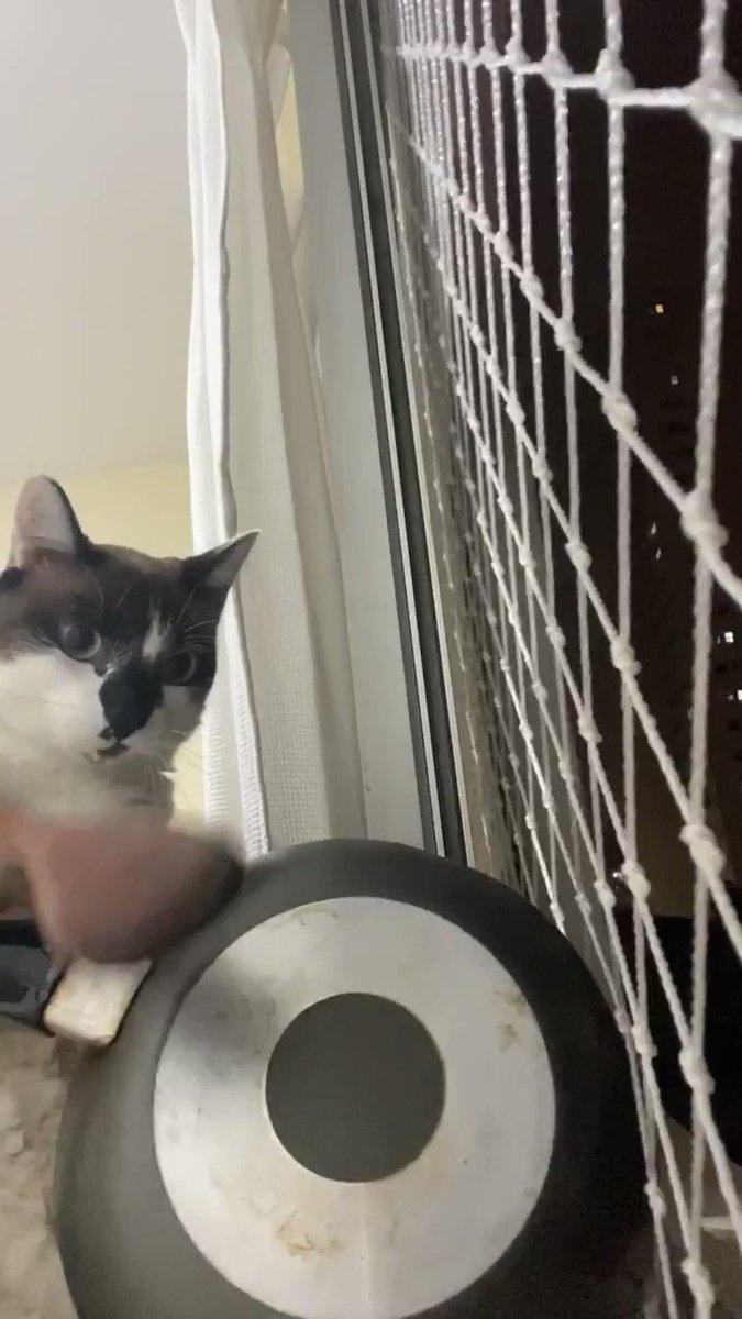 Viih Tube líder:  gatos de todo brasil: https://t.co/lh4CMWLxmc