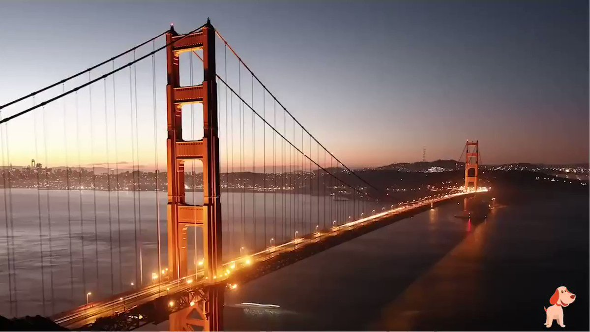 Sab Francisco has a signature landmark that's on everyone's wishlist. So, if you're also a fan of the #GoldenGate bridge like #Buddy, then plan your weekend getaway with #FareObuddy right away!   #wednesdaythought #travelling #BuddyTravels