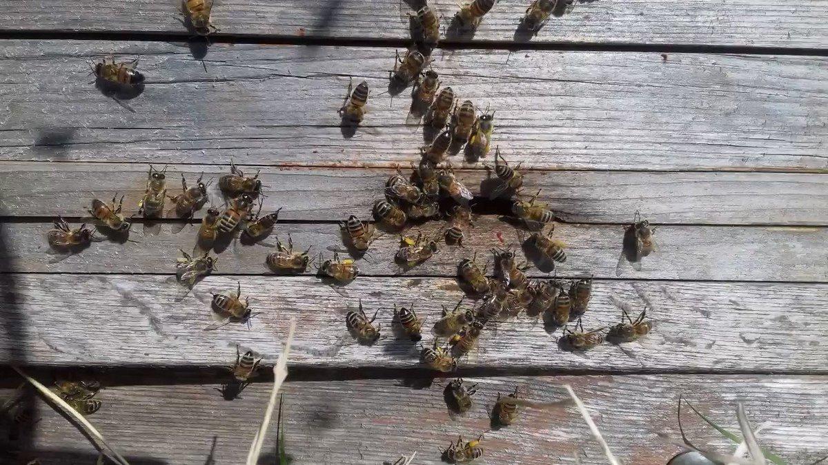 Image for the Tweet beginning: Bee movie in sunnier days.