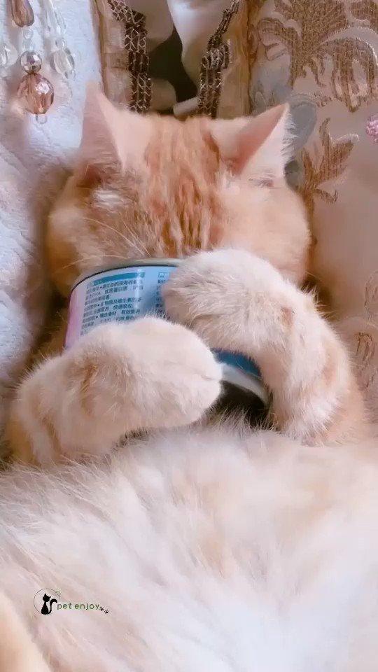 💜#ARitmoDelCuore 💜       ʙᴜᴏɴɢɪᴏʀɴᴏ ɴᴜᴏᴠᴏ            ❦ ❦ ❦ ❦ ❦  #21gennaio ❄️🌤 #ThursdayVibes 🥫🐱  ♥︎ Salve colazione!!♥︎😹  🖋Gatto Silvestro 🐈⬛  #DameMauve 💟  💕🐾 🐾💕 🎥 #catlover 🐈