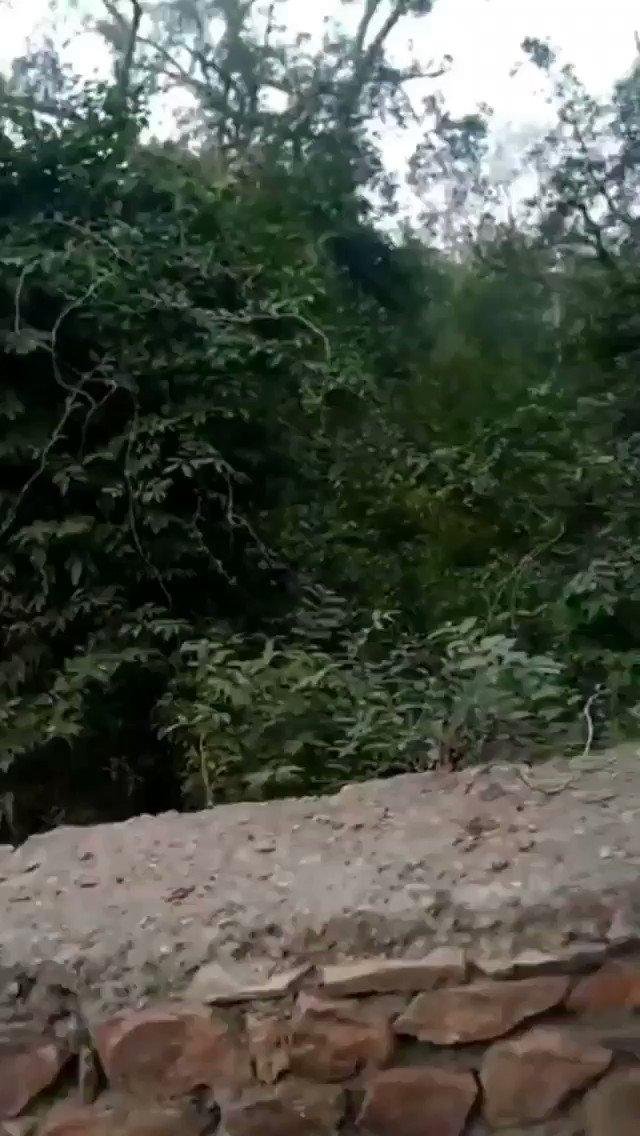 #Ranthambore घूमने जाने वालों थोड़ा सतर्क ही रहे,जंगल का शेर कहीं से भी सामने आ सकता है , @indiatvnews