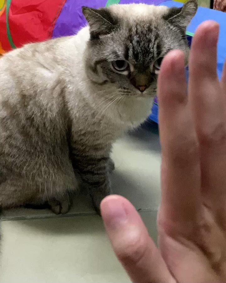 Replying to @beyourmay: ชั้นก็ฝึกแมวไฮไฟว์เหมือนเตนล์นะ แล้วดูสิ่งที่ได้