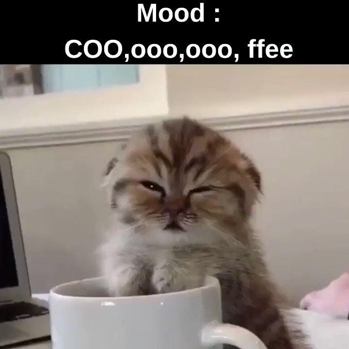 Feel that mood everyday, don't you ?   #thursdaymorning #thursdayvibes #mood #kitten #Coffee #coffeelover #kopi