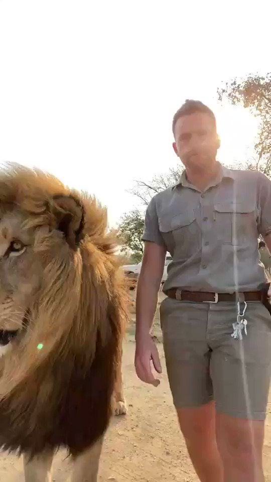@AnimalsWorId I am definitely happiest when he's by my side! @ooxwer456  #lion #wildlife #mypride #love
