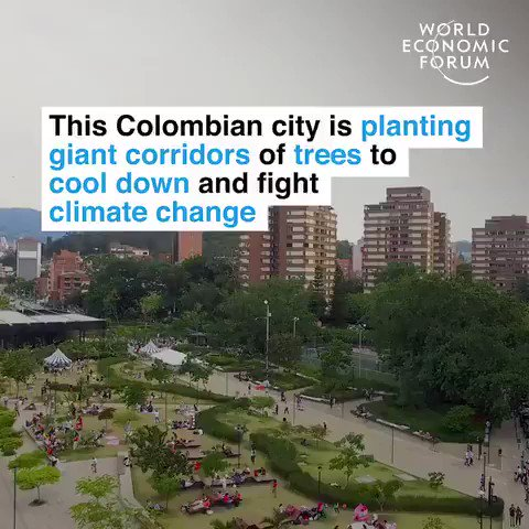 Colombia is planting giant corridors of trees to cool down the city and fight #climatechange.   We have solutions to the #climatecrisis. Time to ditch fossil fuels and implement them. #ActOnClimate  #ClimateEmergency #ClimateAction #Renewables #solar #wind #tech #GreenNewDeal