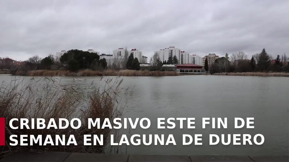 Image for the Tweet beginning: Laguna de Duero (#Valladolid) se