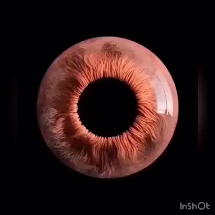 👁 This is how your eye adjusts itself to see better @IrmaRaste #FridayThoughts