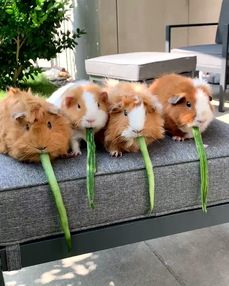 May the best 🐹 win        #WeeklyFluff