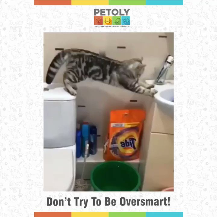 When I was trying to get rid of my fear.  #Petoly #funnyvideo #funtime #spiderman #petlovers #petparents #cat #cutekittens #laughing