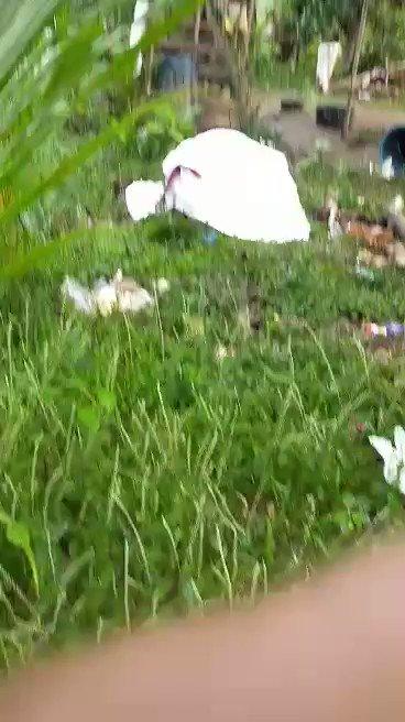 TINGNAN: Video ng pagsunog sa bahay ng dalawang magsasaka sa Sitio Buntog, Hacienda Yulo. Sa halip na kalinga, pandarahas at pagpapalayas ang ibinibigay ng mga gahamang Ayala at Yulo sa ating mga magsasaka. #DefendYuloFarmers #StandWithFarmers #StopTheAttacks