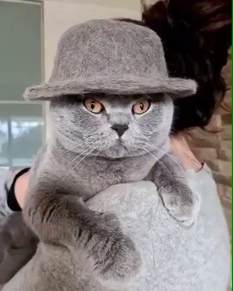 Comment bien porter le chapeau en laine cet hiver 🤗 #Caturday #Chats #CatsOfTwitter