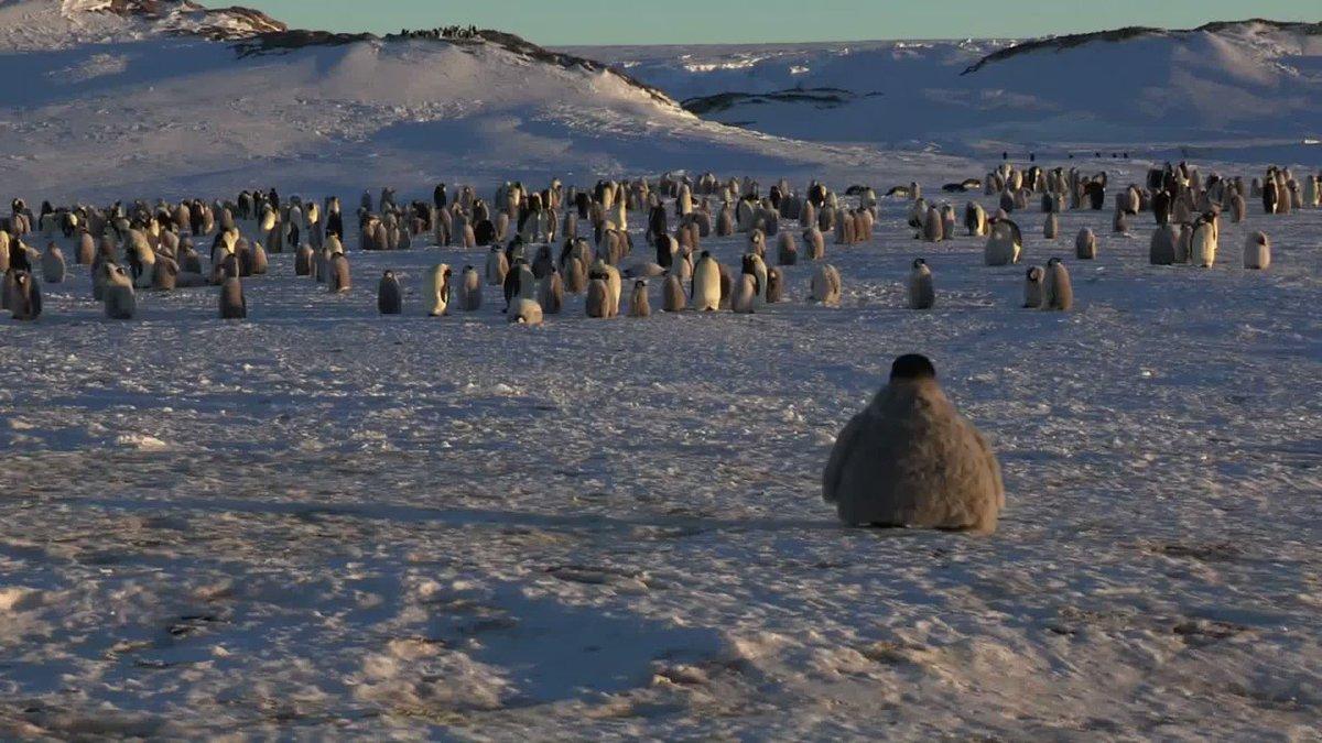 赤ちゃんペンギン型ドローンで団地を覗いてみた結果。仲間になってて可愛い。
