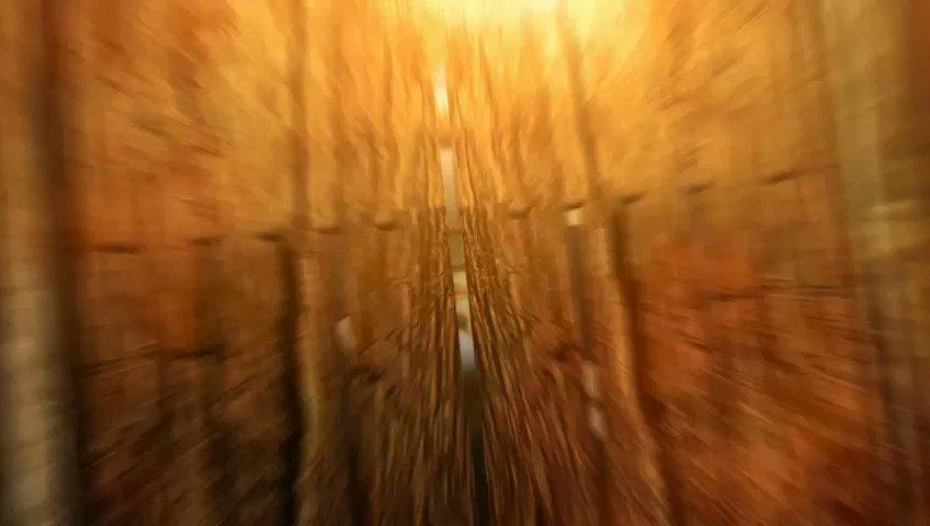 வரலாற்றில் இன்று ஜல்லிக்கட்டு தடை சட்டம் போய் ஜல்லிக்கட்டு நடத்த சட்டம் வந்த நாள் இன்று.  சாதித்தது அம்மாவின் அரசு.  #jallikattu