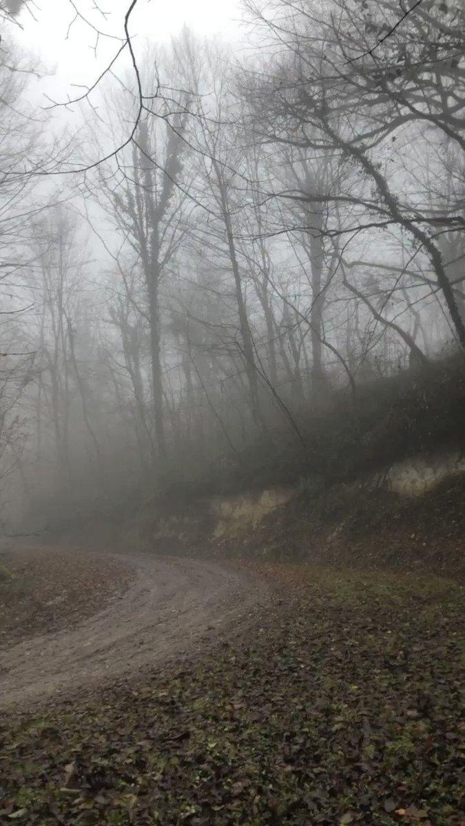 Offroad on foggy forest #bike #dirtbike #cross #Rmz250 #outdoor #RAIN #cycling #exercise #Dakar