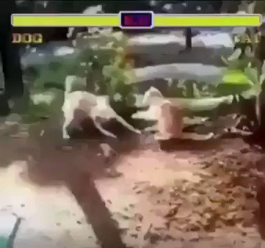 #Animal #fighter 🤭🤭