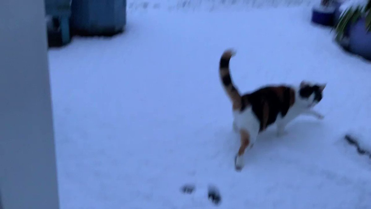 Pixel snow time. She's not really much of an outdoor cat. Prefers the comfort of carpets and heating haha #snow #cats