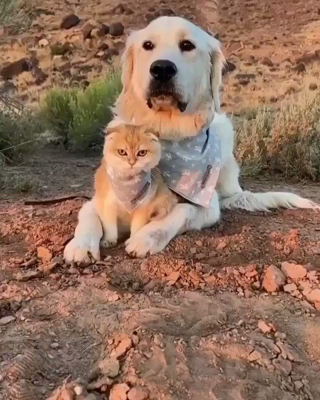 Kitten and dog best friend forever  RT if you like this video #Dog #cats #Friendship #Video #catvideo #dogsoftwitter #StayHomeON #StayVulnerable  #funniesttweets