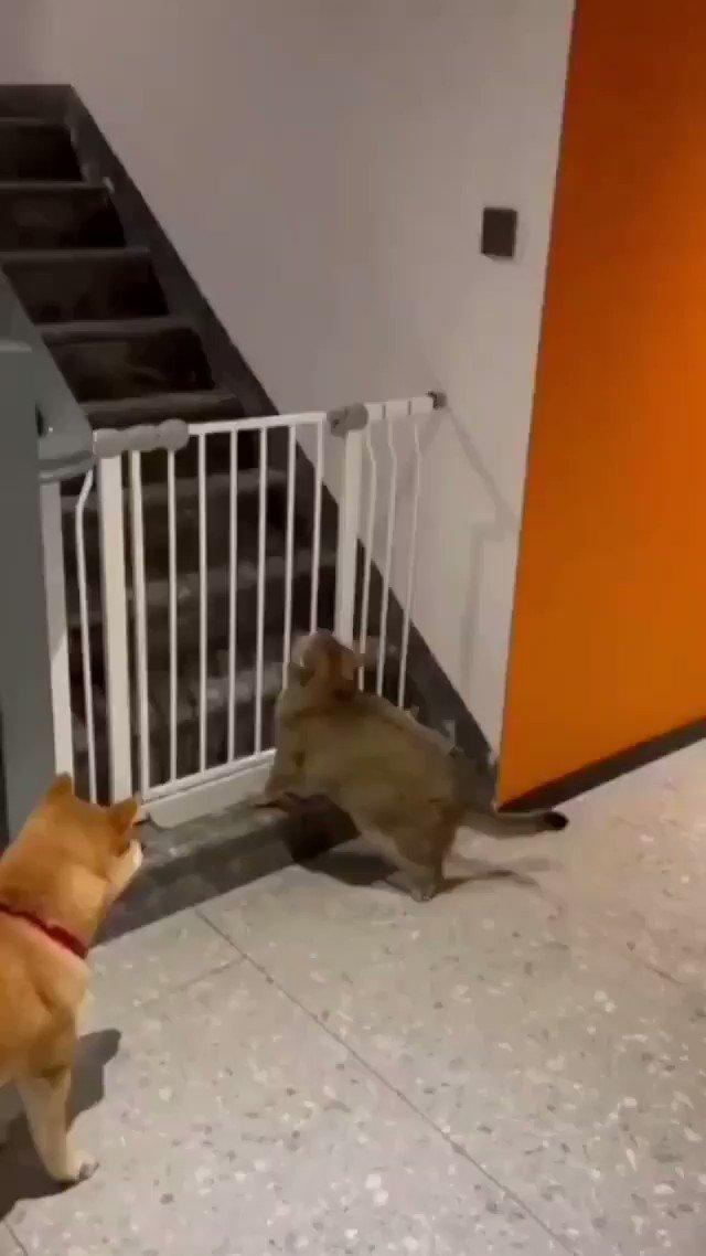 Terkial-kial anjing tu tolong angkat tapi member berat sangat 😭 📽 : 兔八七   IG