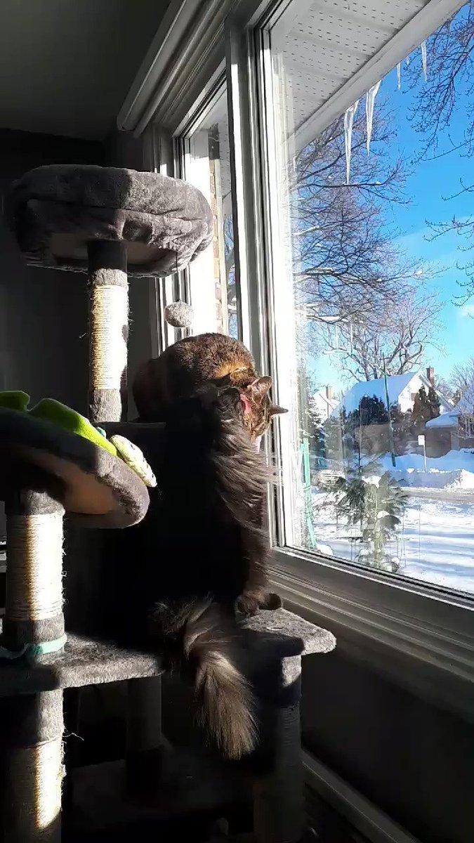 Tit for tat when you're a cat! #sundayvibes  #yourturnmoogie #CatsOfTwitter #sunbeam @MtlARN @MtlRsa
