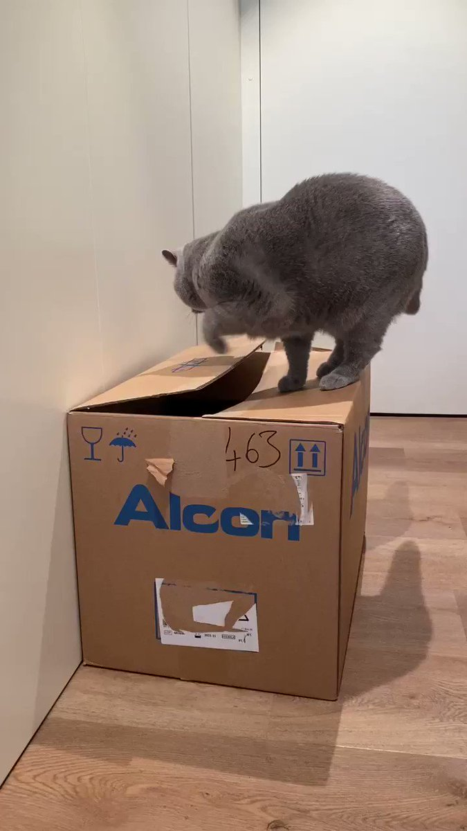 Alice claimed this 📦 first 🙀 Me not happy 🙀🐾 #catboxsunday #CatsOfTwitter #SundayThoughts
