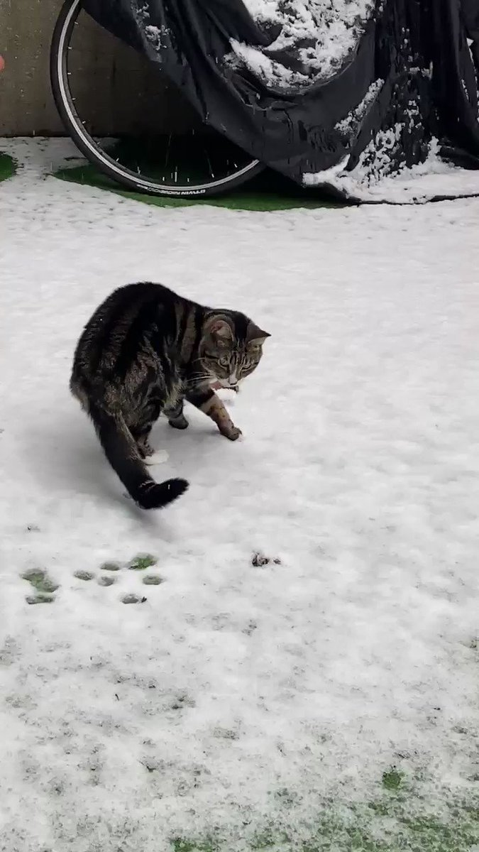 Please watch until the end! 😂😂😂 #narnia #Cat #cats #CatsOfTwitter #snow #Covid_19 #sundayvibes #coronavirus