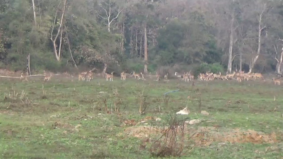 The results of #HarithaHaaram are evident. Increase in number of wild animals across all the reserve forests in #Telanagana due to the efforts of Forest Department's Habitat improvement and conservation in Kawwal Tiger Reserve.   #GreenIndiaChallenge 🌱🌱🌱.