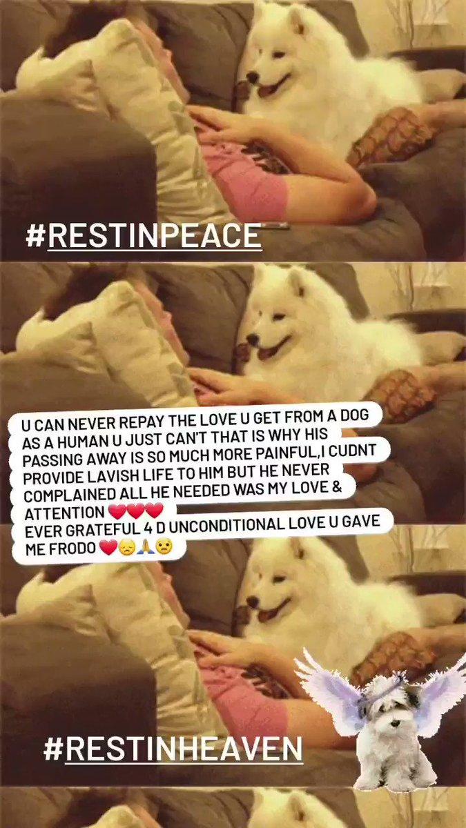 अलविदा कह नहीं सकता  क्योंकि उसके लिये तुझे मेरे दिल और यादों से जाना होगा| मगर साथ हो मेरे यह भी तो कह नही सकता क्योंकि अब तुझे सिवाय तस्वीरों और सपनों के कहीं देख नहीं सकता || खुश होगा तू जन्नत में शायद पर मैं तो ज़मीन पर तेरे बिन रह नहीं सकता 💔😞😿 #Missingyou #Dog #RIP  #RIH