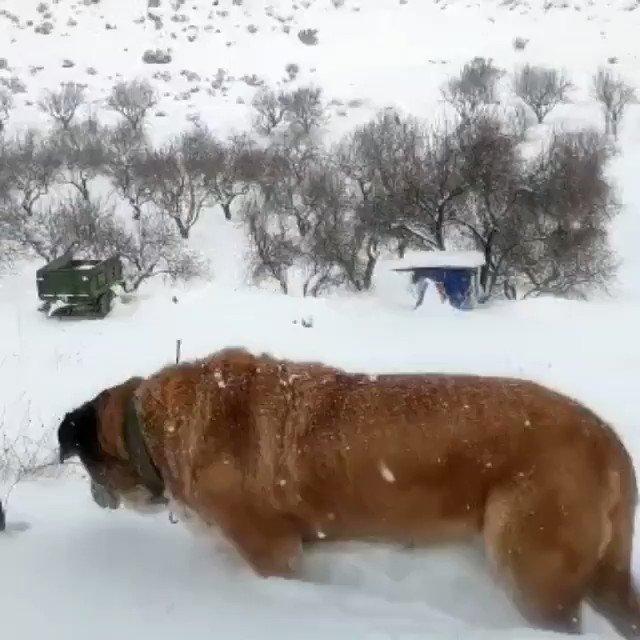 Disfrutar de la nieve ❄❄❄  #CampoCariñena #nieve