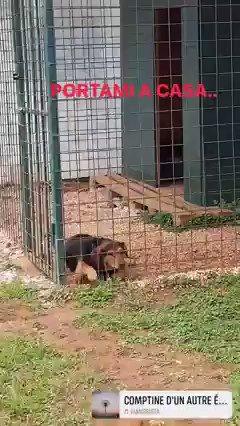 Salviamo George, che adora i bambini e aspetta una famiglia tutta sua! È un cucciolo che si trova a #palermo, #sicilia 🧡 #dogs #cani #adottami #adotta #adopt #help #25gennaio