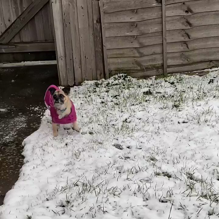 Happy Monday everyone! Have a lovely day! Playing in the snow yesterday ☃️😃🐾 #mondaythoughts #mondaymorning #uksnow #snowballs #lockdown3 #stayhome #staysafe #dogsoftwitter #dogsofinstagram